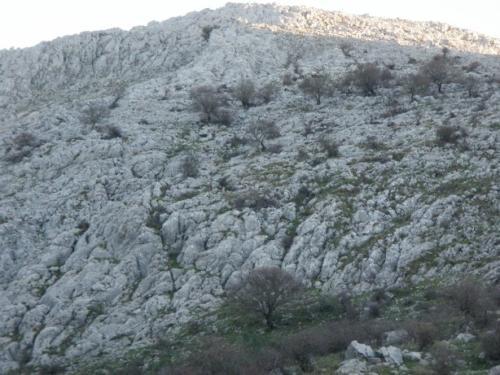 Ronda Ibex Mountains