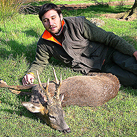 East_European_Roe_Deer001