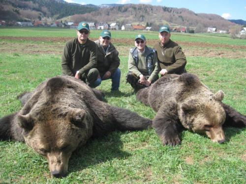 European_Brown_Bear003