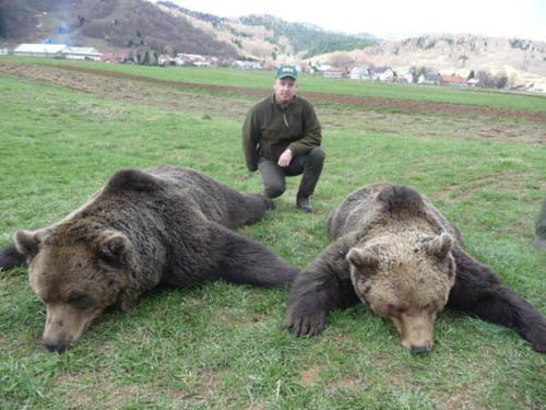 European_Brown_Bear011