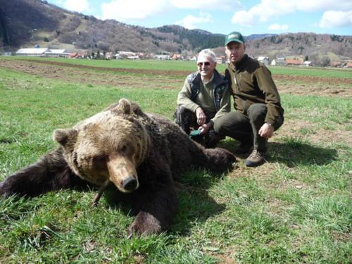 European_Brown_Bear012