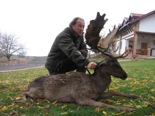 European_Fallow_Deer002
