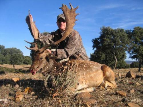 European_Fallow_Deer011