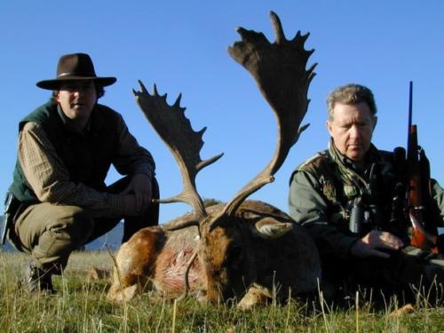 European_Fallow_Deer015