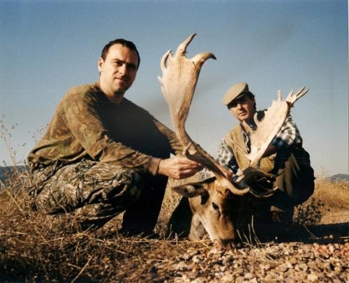 European_Fallow_Deer020