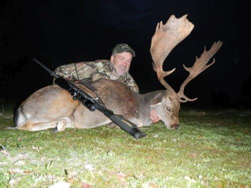European_Fallow_Deer027