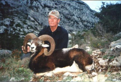 European_Mouflon_Sheep004