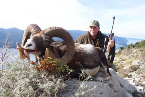 European_Mouflon_Sheep008