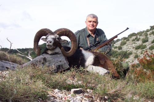 European_Mouflon_Sheep010