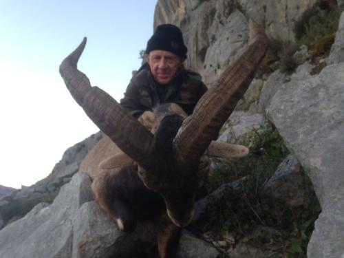 South Eastern Ibex