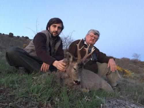 Roe_Deer028