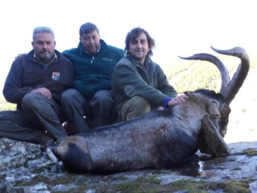 South_Eastern_Ibex012