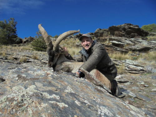 South_Eastern_Ibex025