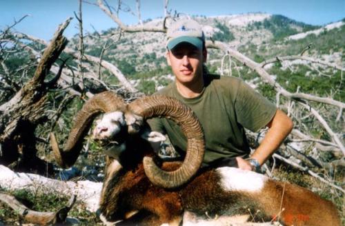 EUROPEAN MOUFLON SHEEP